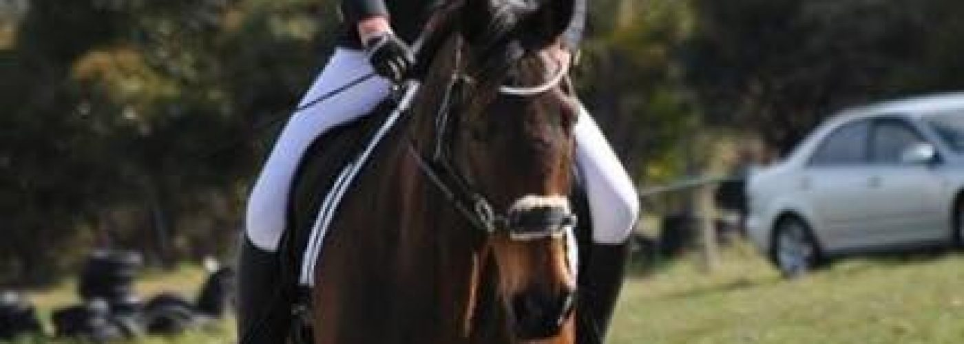 Dallas-bitless-dressage2